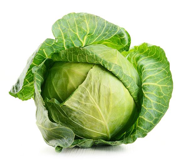 Cabbage Export, Cabbage Exporter, Cabbage Producer, Экспорт Капусты, Экспортер Капусты, Производитель Капусты