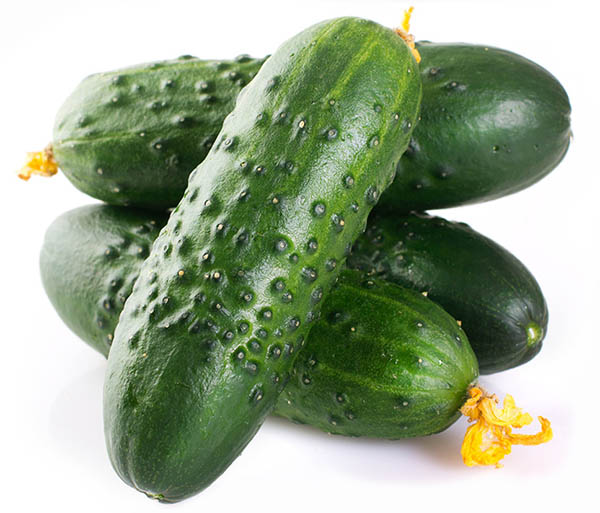 cucumber export, cucumber exporter, cucumber producer, экспорт огурцов, экспортер огурцов, производитель огурцов, огурец оптом