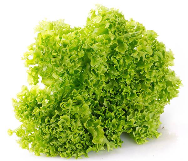 lettuce export, lettuce exporter, lettuce producer, экспорт салата, экспортер салата, производитель салата